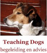 Probleemgedrag hond
