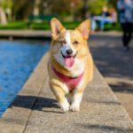 Je hond echt gelukkig maken? Wij hebben een paar tips voor je